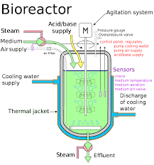 what is difference between fermentor and bioreactor? quora