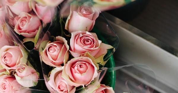 What Do Black Roses Symbolize Or Represent Quora