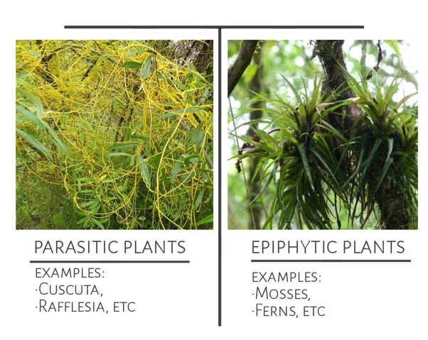 Article images parasiticplants03.
