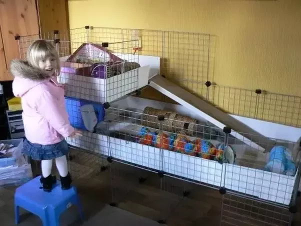 how to make guinea pig cages at home quora