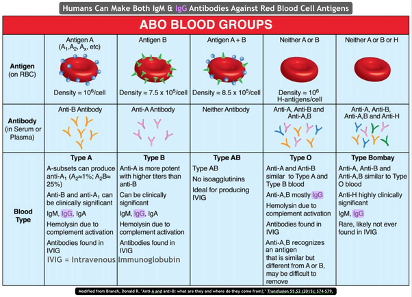 Why does our immune system produce IgM but not IgG antibodies against red  blood cell antigens? - Quora