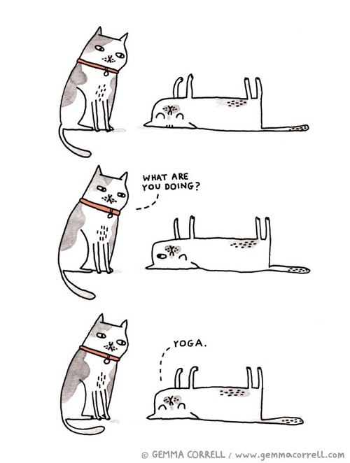 What would you do if you were a cat, and what kind of cat