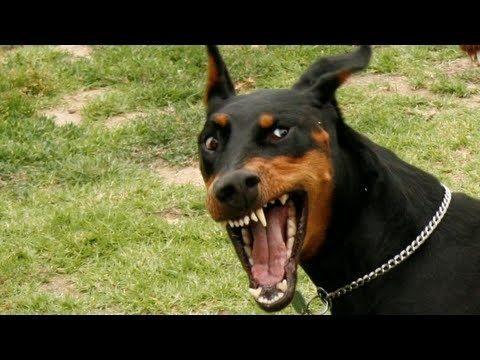 What Are Some Of The Most Dangerous Dog Breeds Quora