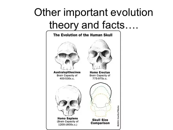 the theory and the facts about evolution of man Add other thousands for the evolution of all the thoughts that man can have, all the objective and subjective reality that ebbs and flows in us like part of the pulse beat of an inscrutable cosmos add them all in and you long ago stopped talking about rational thought, much less scientific evidence.