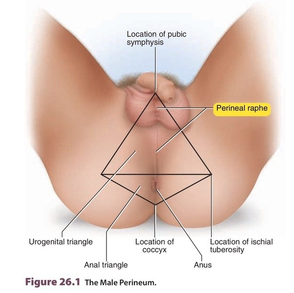 penis and between anus Pain