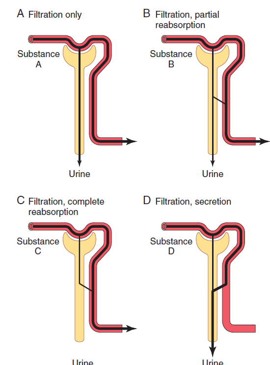 In which part of nephron is the lowest concentration of glucose quora note that in the above figure the yellow y shaped is the representative of a nephron and the top most being the bowmans capsule and lower extension is a ccuart Images