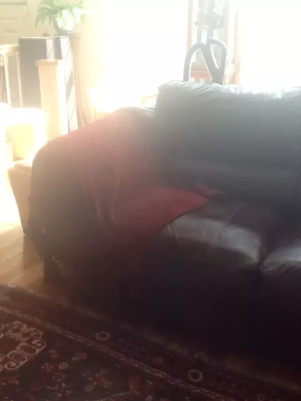 Cat Repellent On A Leather Couch