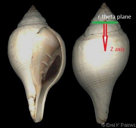 Hawaiian conch shell Royalty-Free Music and Sounds - Storyblocks Audio