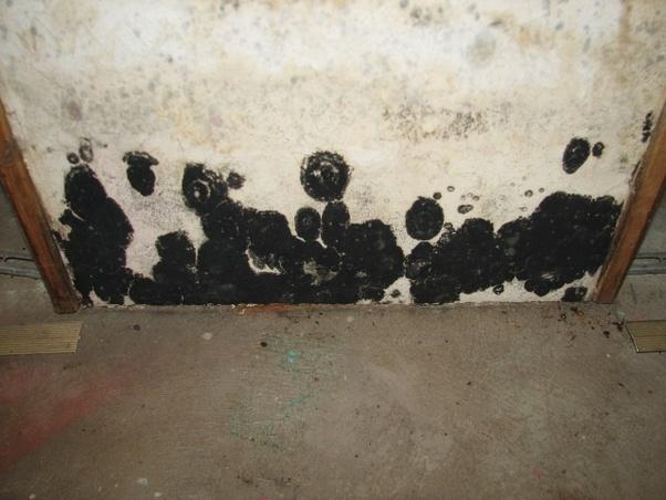 9+ Ultimate Black Mold Formulas