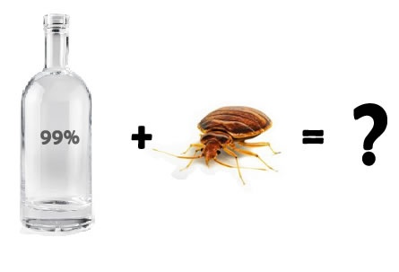 How does rubbing alcohol kill bed bugs? - Quora
