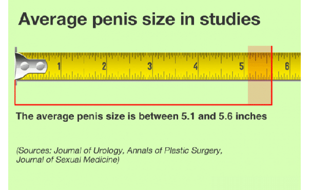 What is average dick length