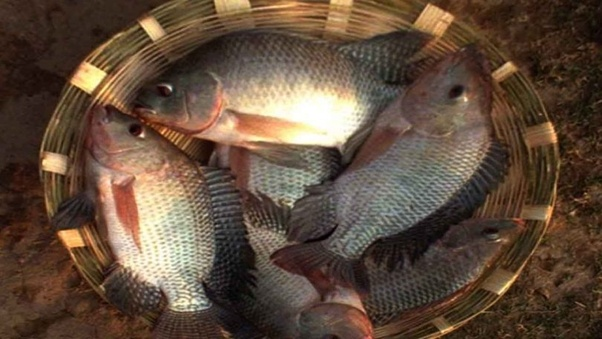 How profitable is fish farming? - Quora