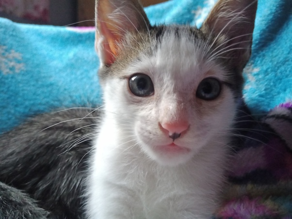 Bisakah Kamu Menunjukkan Foto Kucing Peliharaan Kamu Quora
