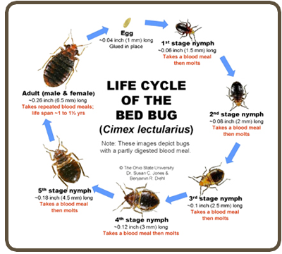 How Much Does Bedbug Treatment Cost In India Quora