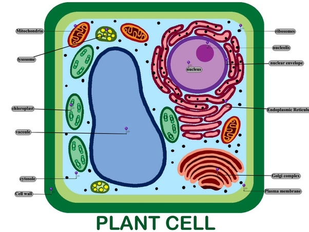 vacuoles and vesicles Therefore, if it is true that the vesicles with a density of 124 g/cm 3 function as the transport vesicles for storage proteins to the protein storage vacuoles, then the vesicles should contain proprotein precursors of storage proteins but not mature proteins.