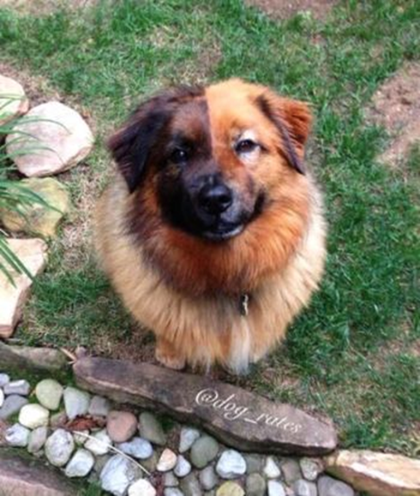 What are the best examples of chimerism? - Quora Chimera Genetics Dog