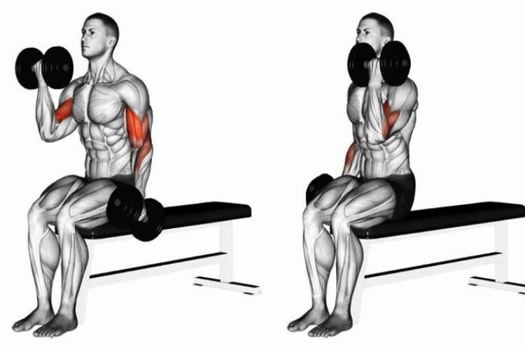 Alternate seated dumbbell curls