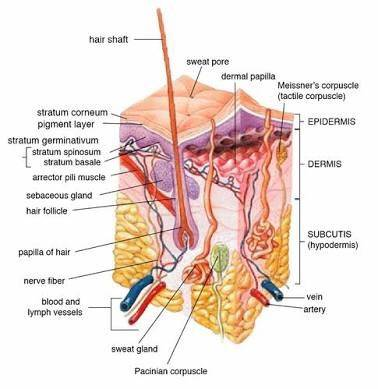 Why Is It That When I Pluck A Hair In The Perineal Region There Is
