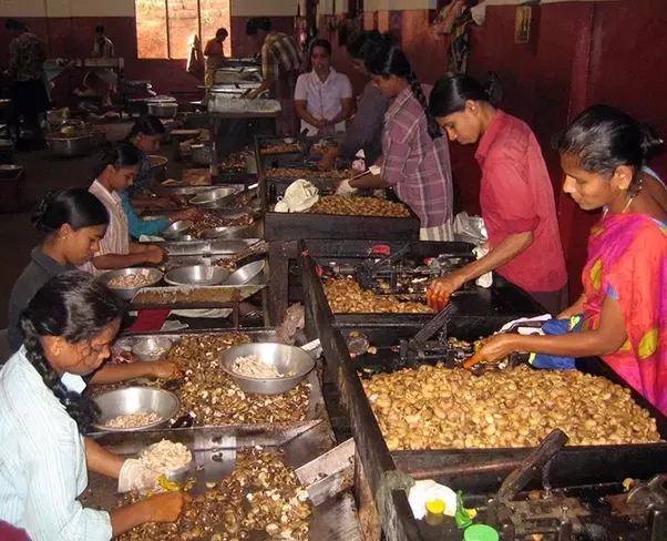 As You Have The Access To Cheap Labour Can Easily Manage This Whole Business Under 3 Lakhs
