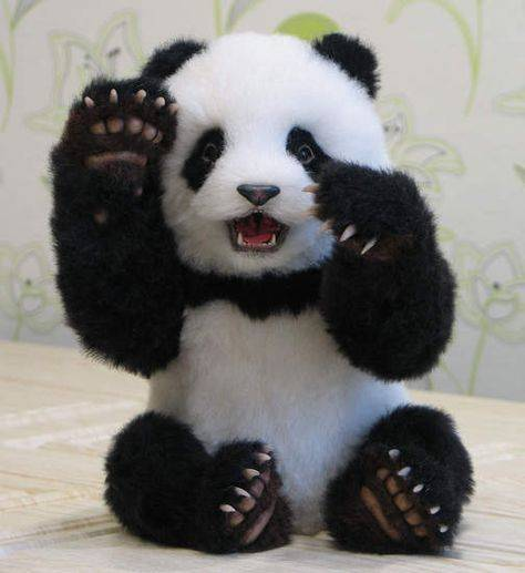 why do people love panda bears so much what is the big deal about