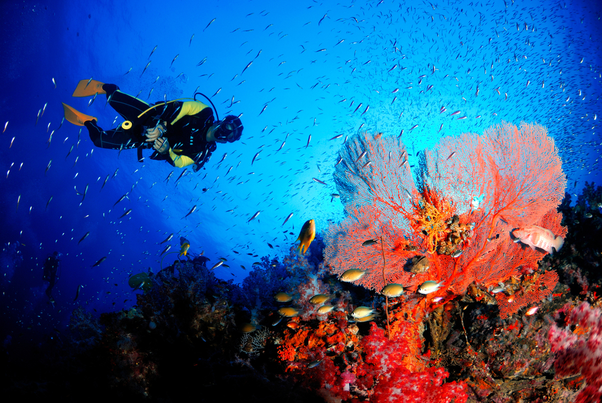 What Will Be The Price Of Scuba Diving (non-swimmers) In