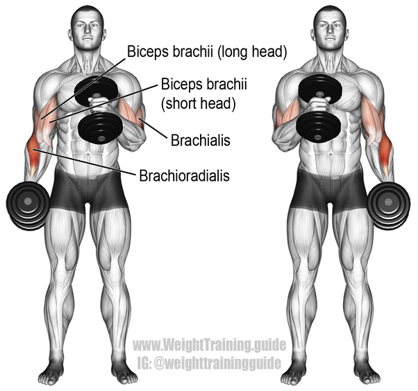 What Are The Best Basic Dumbbell Exercises Quora