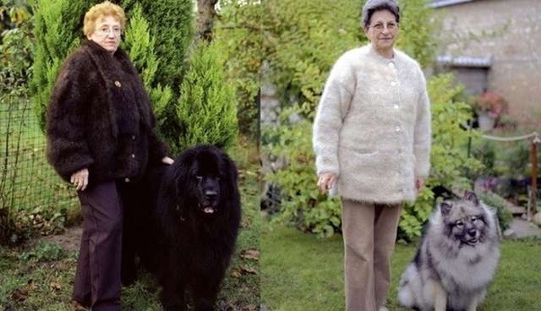 Two women in dog-hair cardigans, with their dogs - a Tibetan mastiff and a husky. I think - I'm not great on dog breeds.