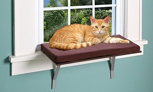 Do Cats Prefer Cat Hammocks With A Stand Or Attached To A