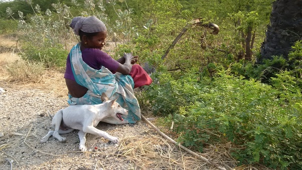 How does a ramanathapuram mandai dog look like? - Quora