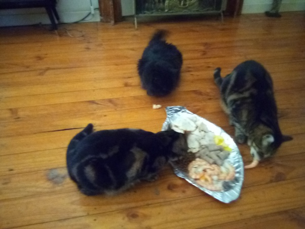 What Do Vegans Feed Their Cats And Dogs Quora