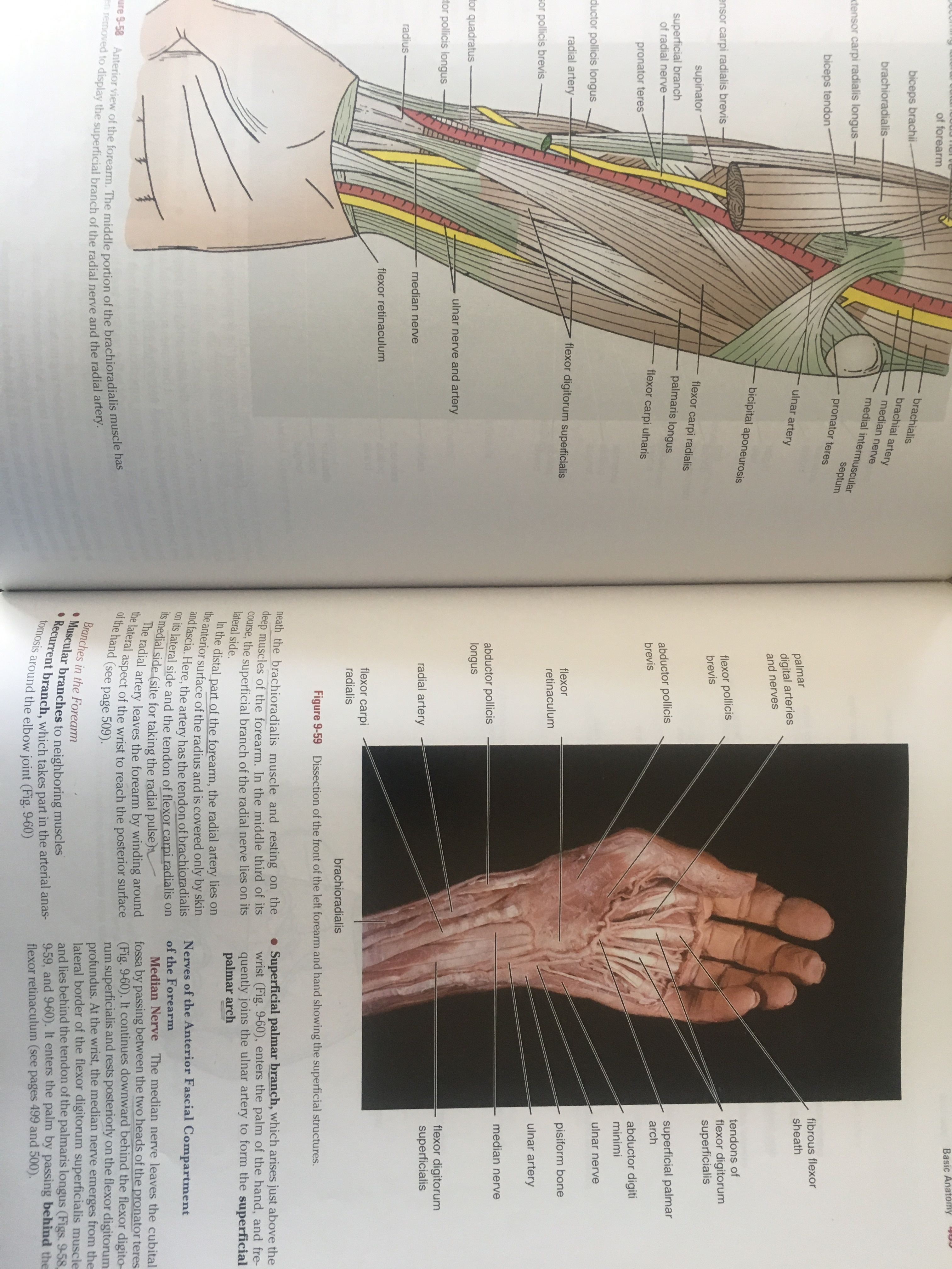 Snell Clinically Oriented Anatomy Pdf