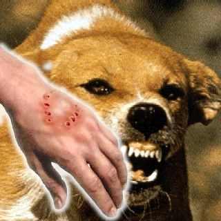 Can You Get Rabies A Dog Scratch