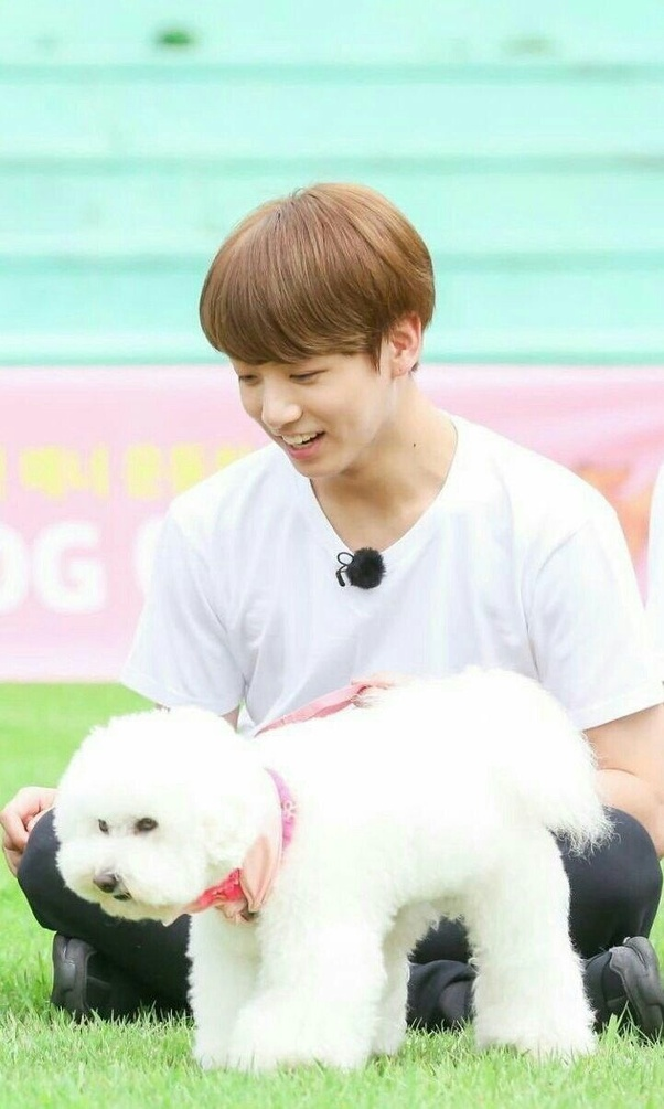 Jungkook Dog