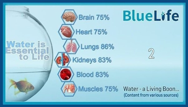 what is the importance of water