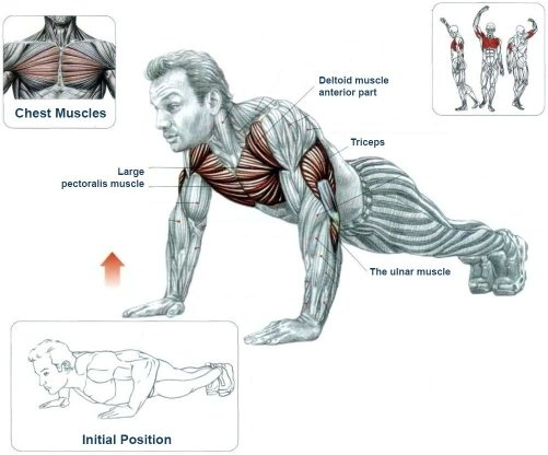 Can push ups really enlarge your chest? - Quora