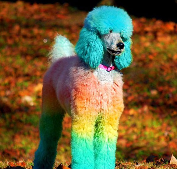 Why can\'t dogs be green or purple when they come in pretty ...