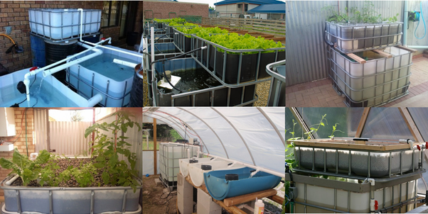 What Is The Cheapest Amount I Can Purchase An Aquaponics