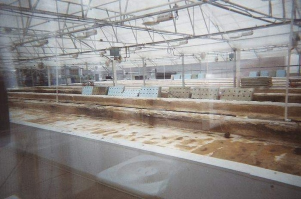 How successful can an aquaponics business be? - Quora