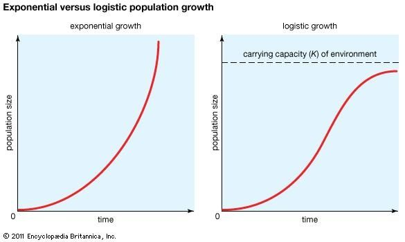 relationship between exponential and logarithmic graphs
