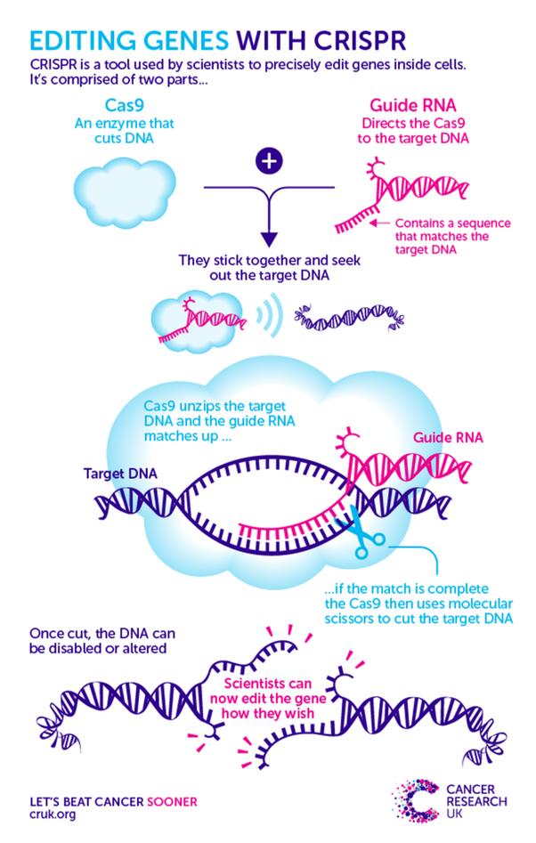CRISPR有多强大? 它为未来打开了什么门?