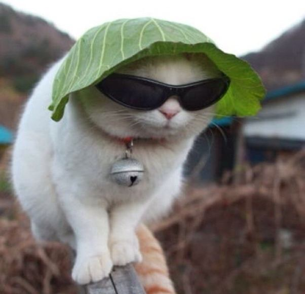 why are cats afraid of cucumbers quora