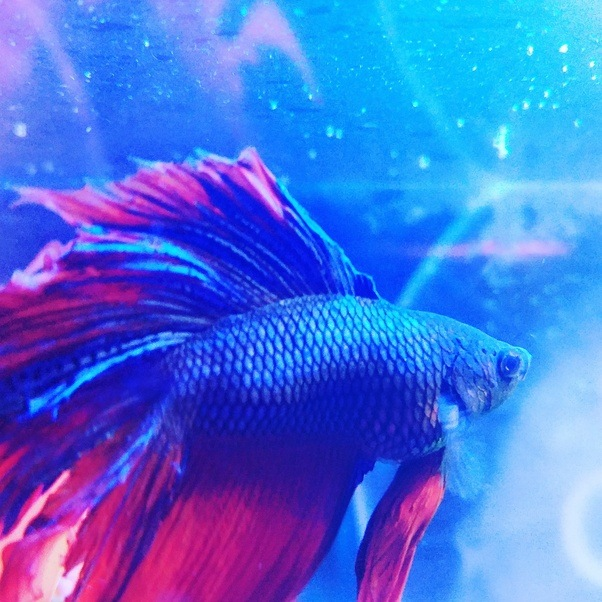 Types of fish at walmart the best fish 2018 for Swai fish walmart
