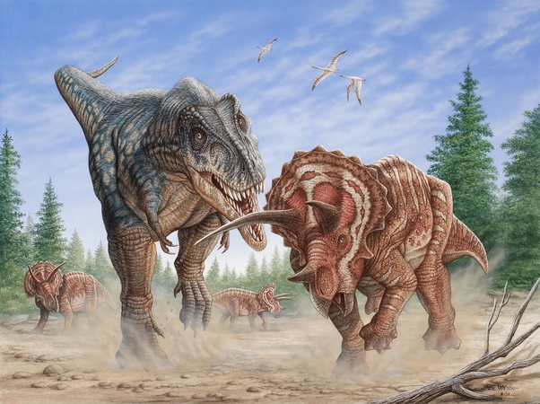 how did a triceratops fight a t rex quora