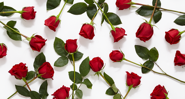 What Is The Meaning Of A Red Rose Quora