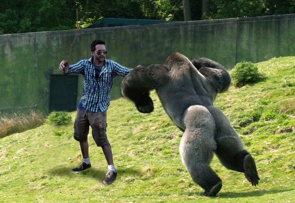 What happens if you start pounding your chest in front of a gorilla? - Quora