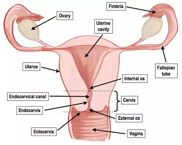 Sex education diagram