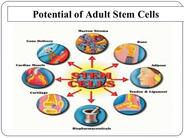 Naked adult stem cells bone marrow