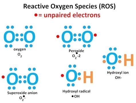 What Are The Dangers Of Reactive Oxygen Species In The Body Quora