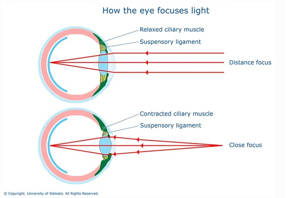 What is the reason why we cant see properly when we keep any object when looking at an object that is far away the muscles relax and the lens is flatter this allows the light rays to converge and focus on your retina ccuart Choice Image