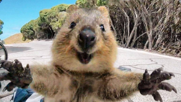 What's the cutest wild animal? - Quora  What's the ...